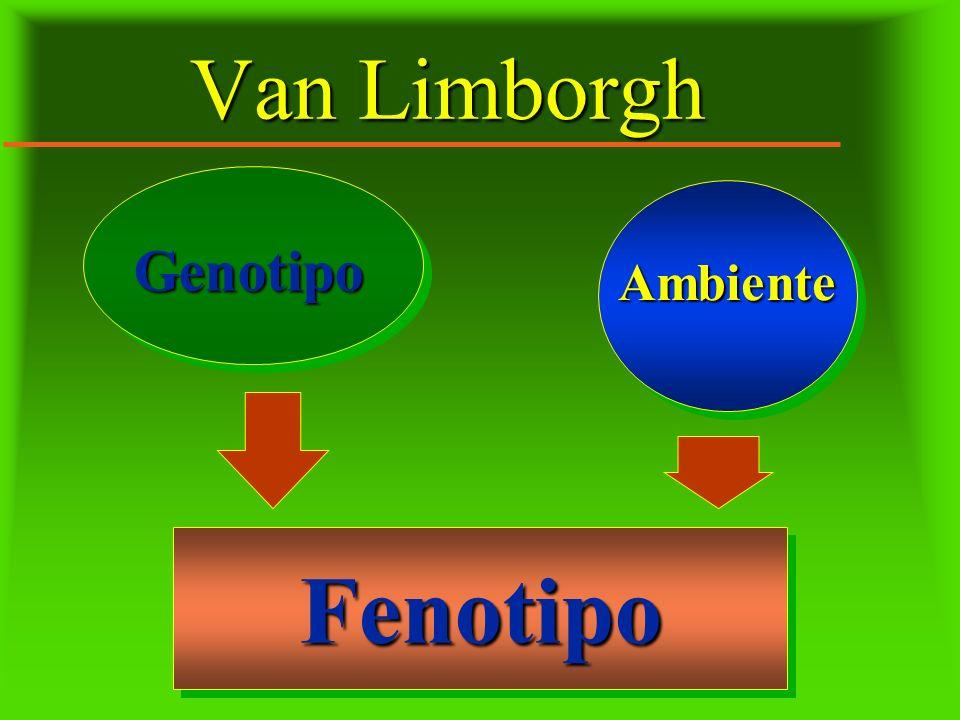 Van Limborgh Genotipo Ambiente Fenotipo