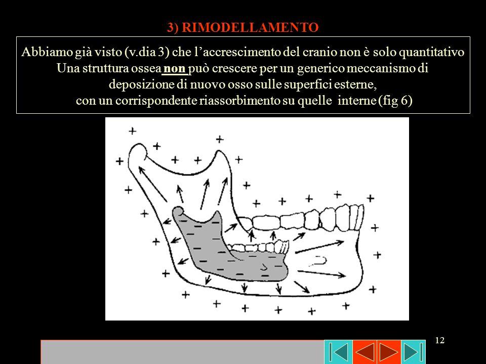 Una struttura ossea non può crescere per un generico meccanismo di
