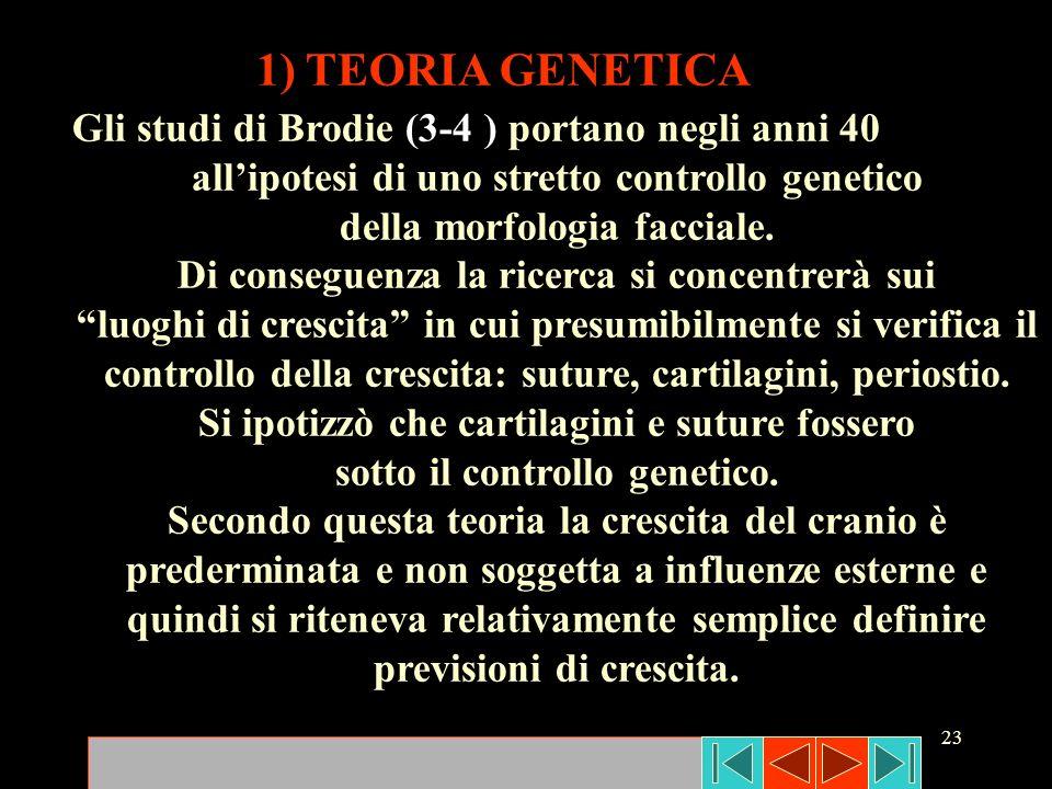 1) TEORIA GENETICA Gli studi di Brodie (3-4 ) portano negli anni 40
