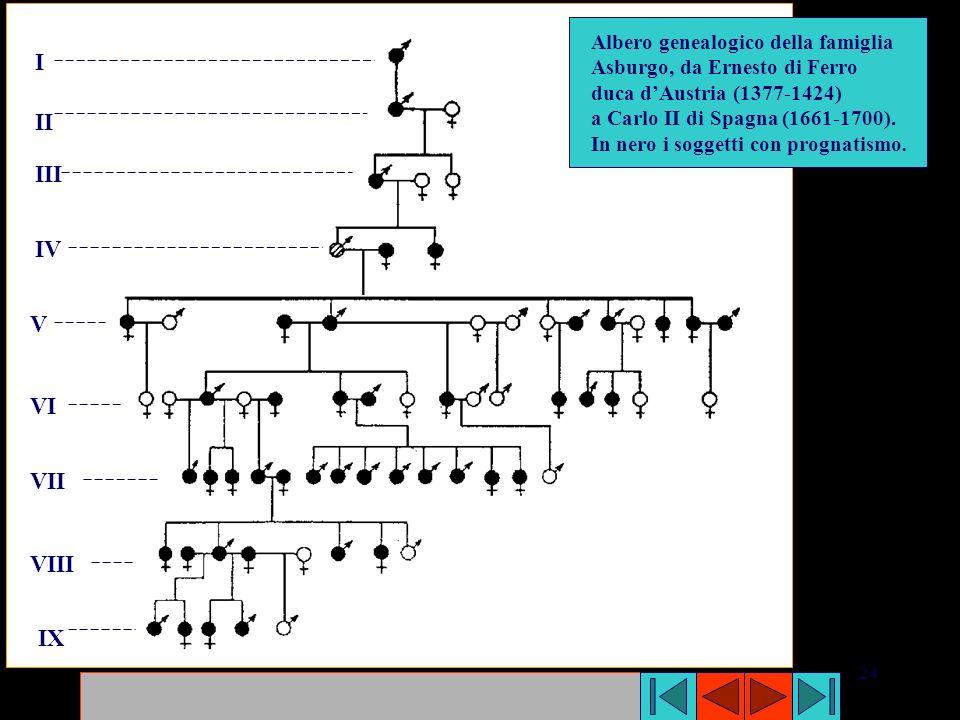 I II III IV V VI VII VIII IX Albero genealogico della famiglia