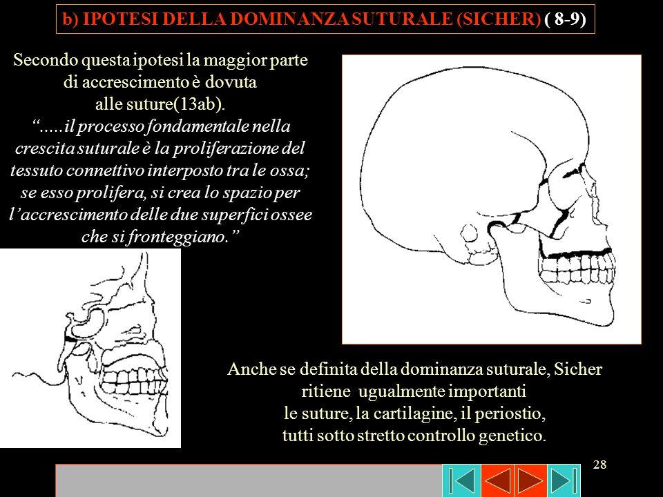 b) IPOTESI DELLA DOMINANZA SUTURALE (SICHER) ( 8-9)