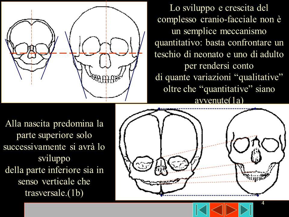 della parte inferiore sia in senso verticale che trasversale.(1b)