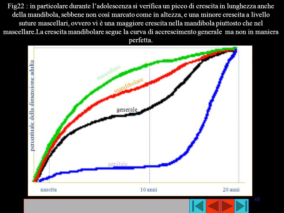 Fig22 : in particolare durante l'adolescenza si verifica un picco di crescita in lunghezza anche della mandibola, sebbene non così marcato come in altezza, e una minore crescita a livello suture mascellari, ovvero vi è una maggiore crescita nella mandibola piuttosto che nel mascellare.La crescita mandibolare segue la curva di accrescimento generale ma non in maniera perfetta.