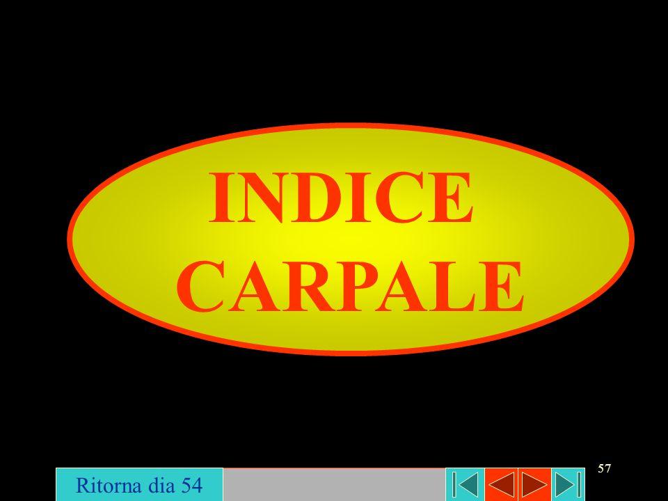 INDICE CARPALE Ritorna dia 54