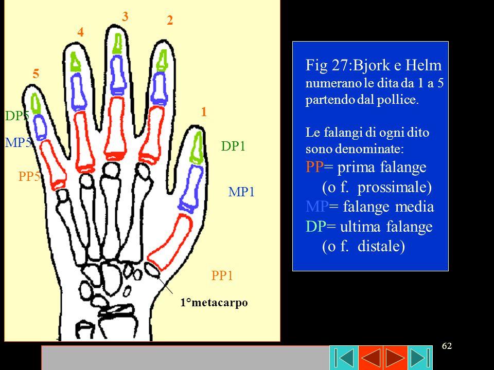 Fig 27:Bjork e Helm PP= prima falange (o f. prossimale)