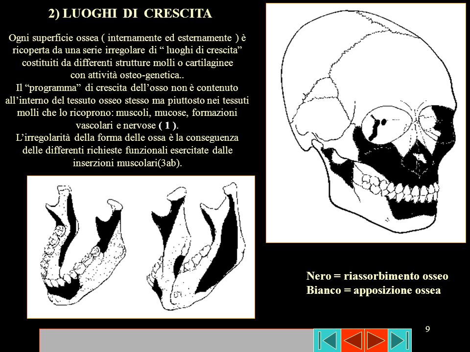 con attività osteo-genetica..