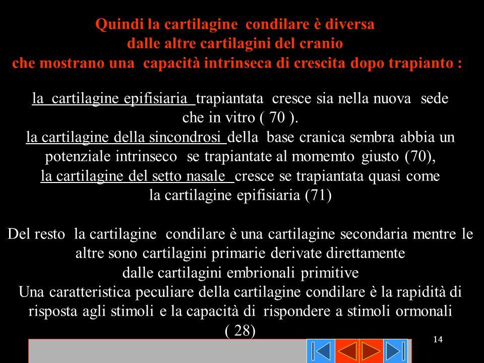 Quindi la cartilagine condilare è diversa