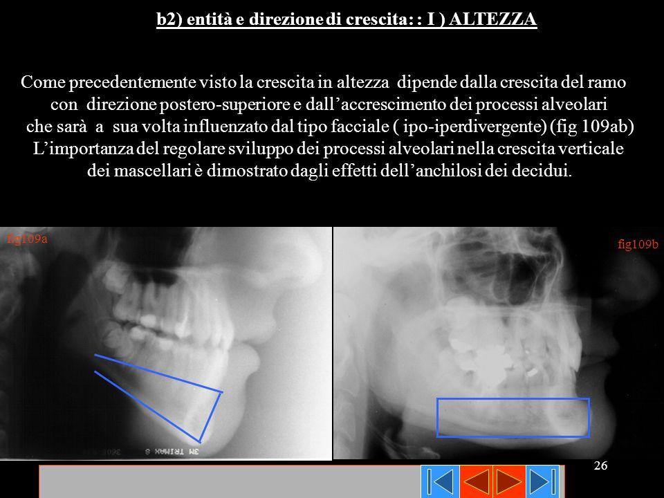 dei mascellari è dimostrato dagli effetti dell'anchilosi dei decidui.