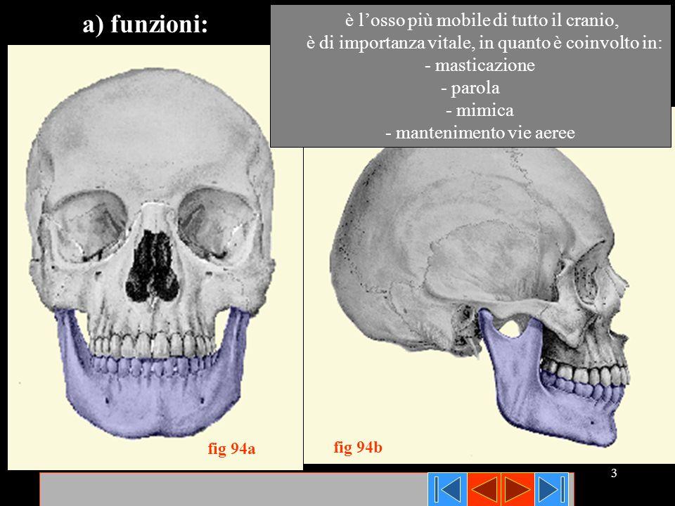 a) funzioni: è l'osso più mobile di tutto il cranio,