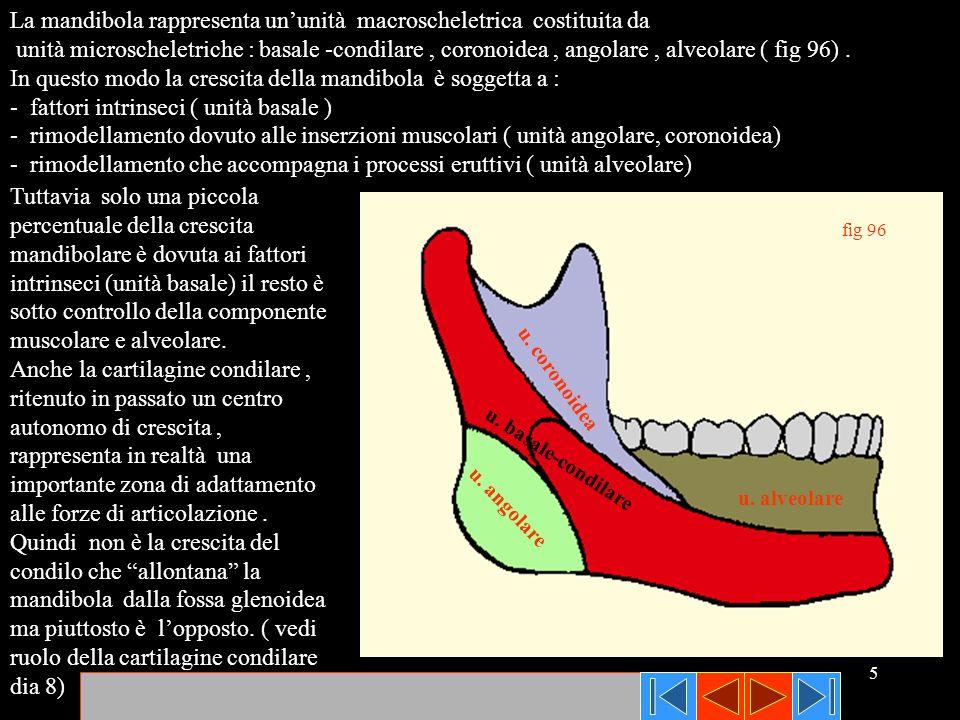 La mandibola rappresenta un'unità macroscheletrica costituita da