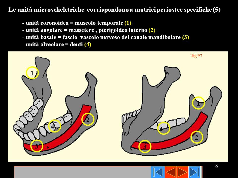 Le unità microscheletriche corrispondono a matrici periostee specifiche (5)