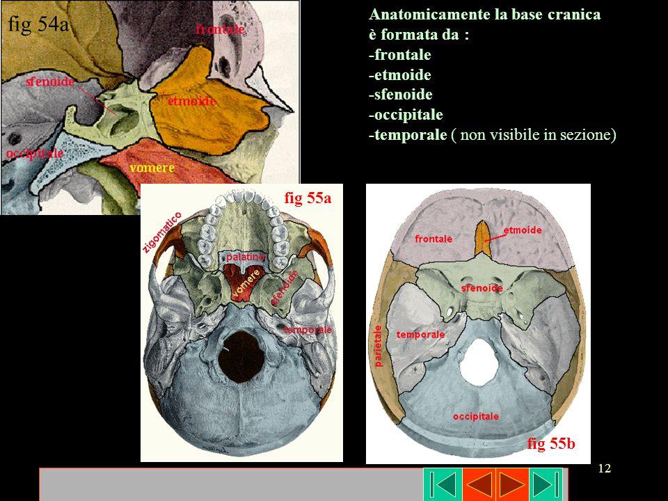 fig 54a Anatomicamente la base cranica è formata da : -frontale