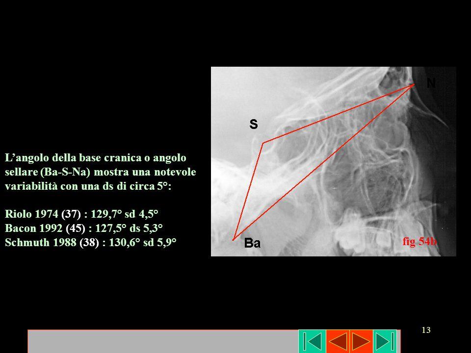 fig 54b L'angolo della base cranica o angolo. sellare (Ba-S-Na) mostra una notevole. variabilità con una ds di circa 5°: