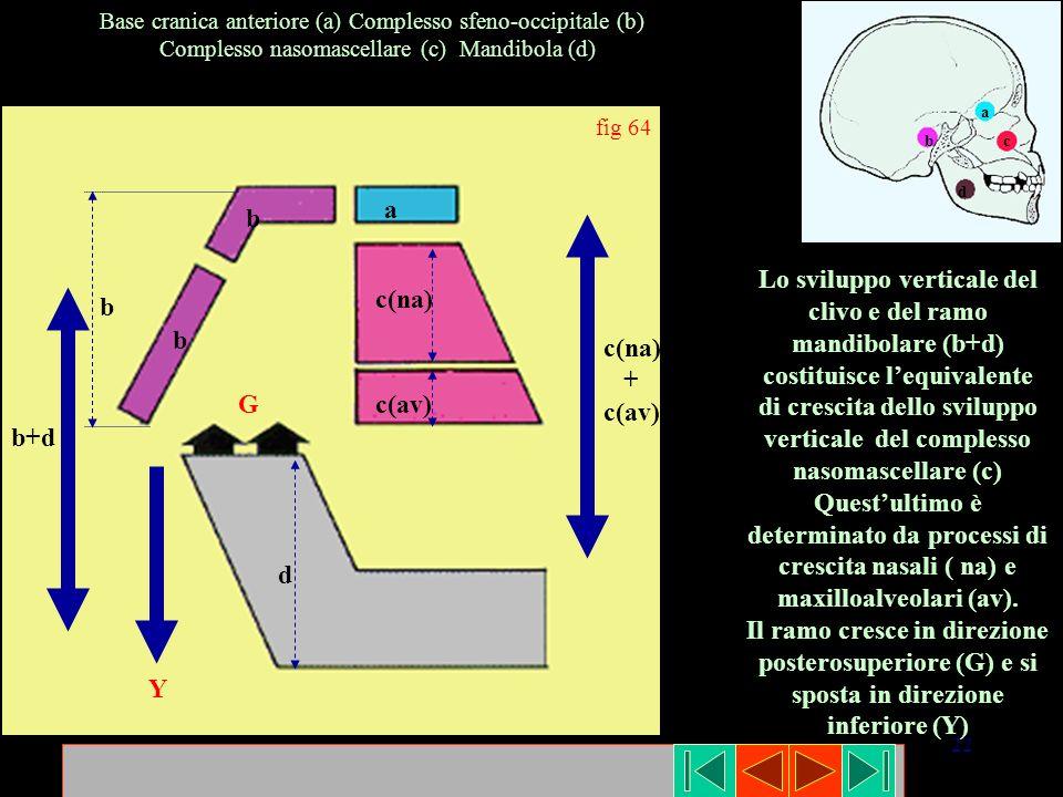 di crescita dello sviluppo verticale del complesso nasomascellare (c)