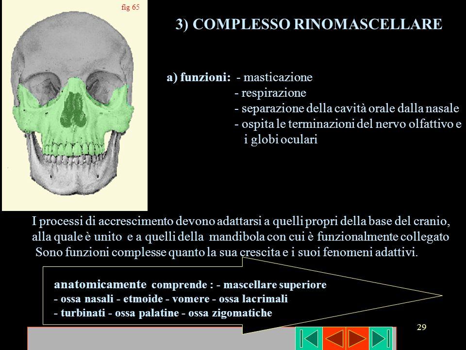 3) COMPLESSO RINOMASCELLARE
