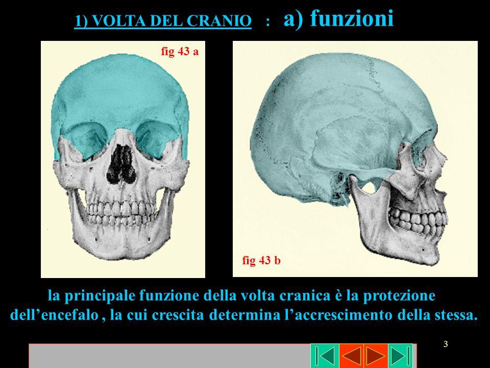 la principale funzione della volta cranica è la protezione