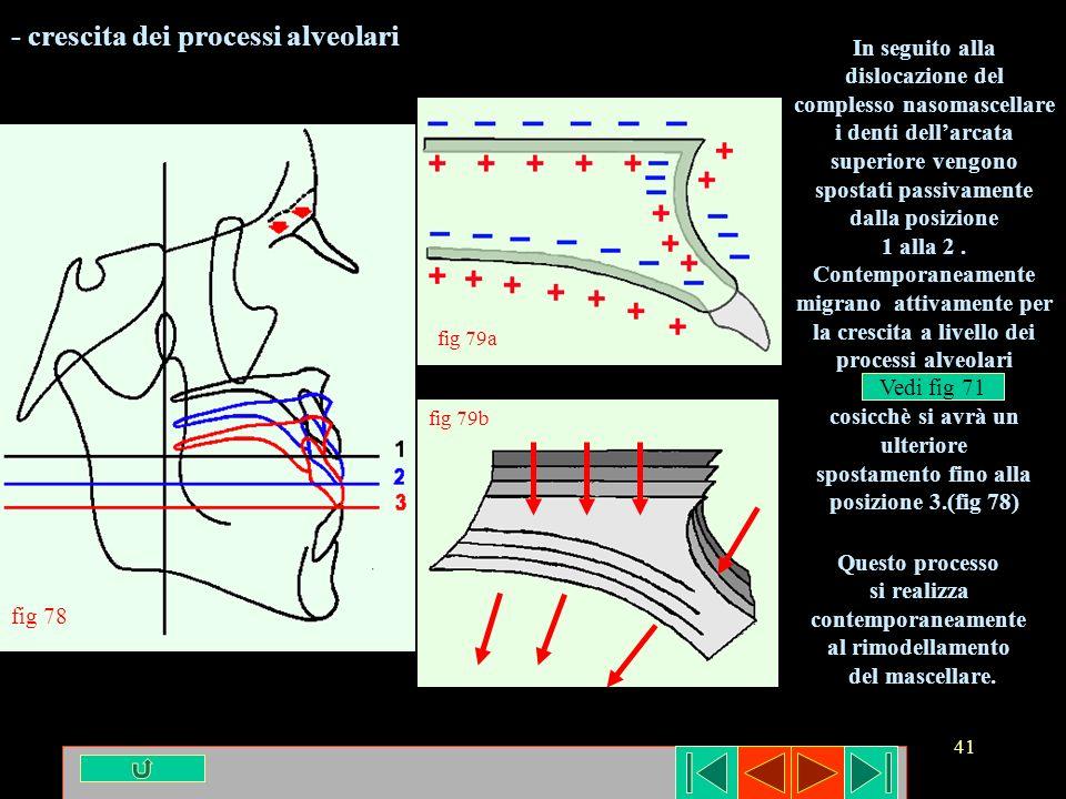 - crescita dei processi alveolari