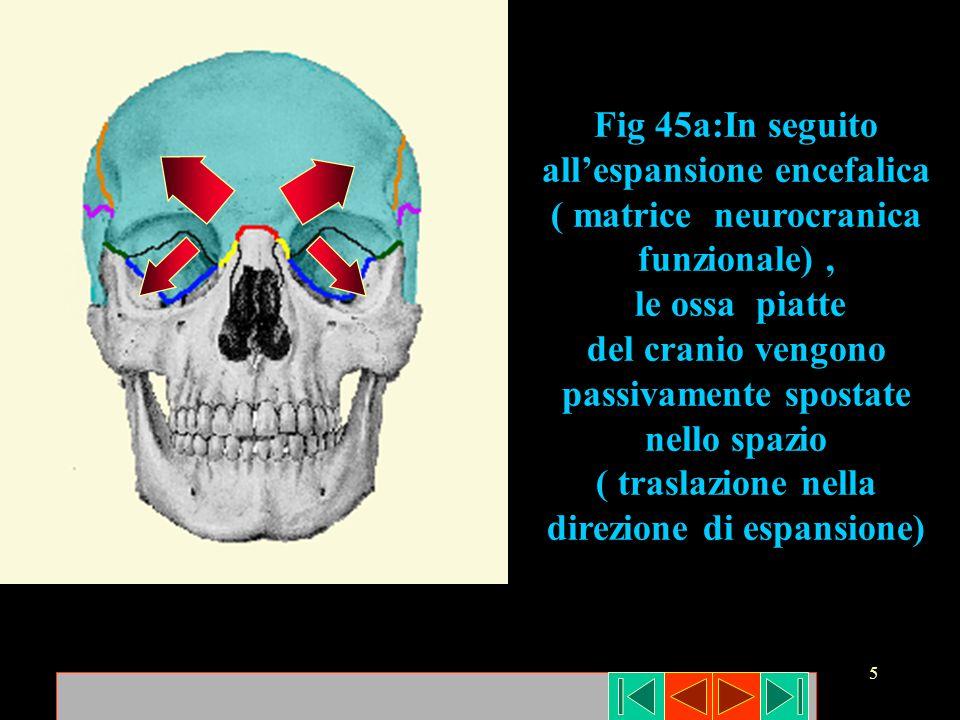 del cranio vengono passivamente spostate nello spazio