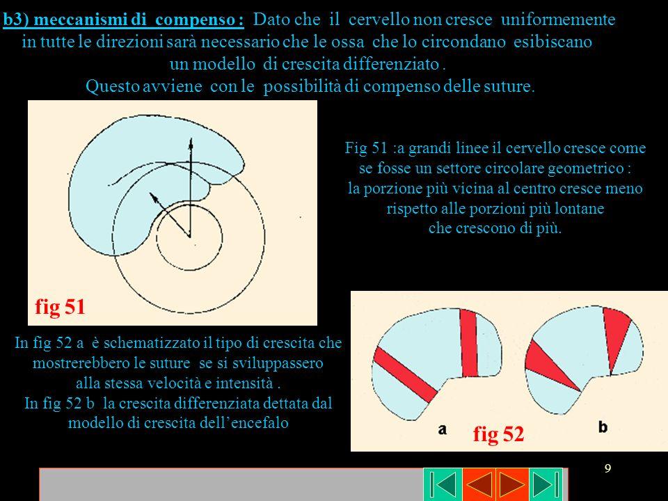 b3) meccanismi di compenso : Dato che il cervello non cresce uniformemente