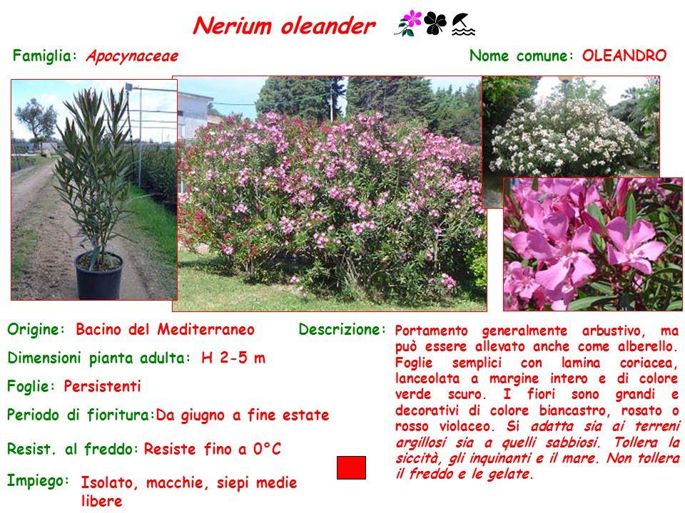 Nerium oleander Famiglia: Apocynaceae Nome comune: OLEANDRO Origine: