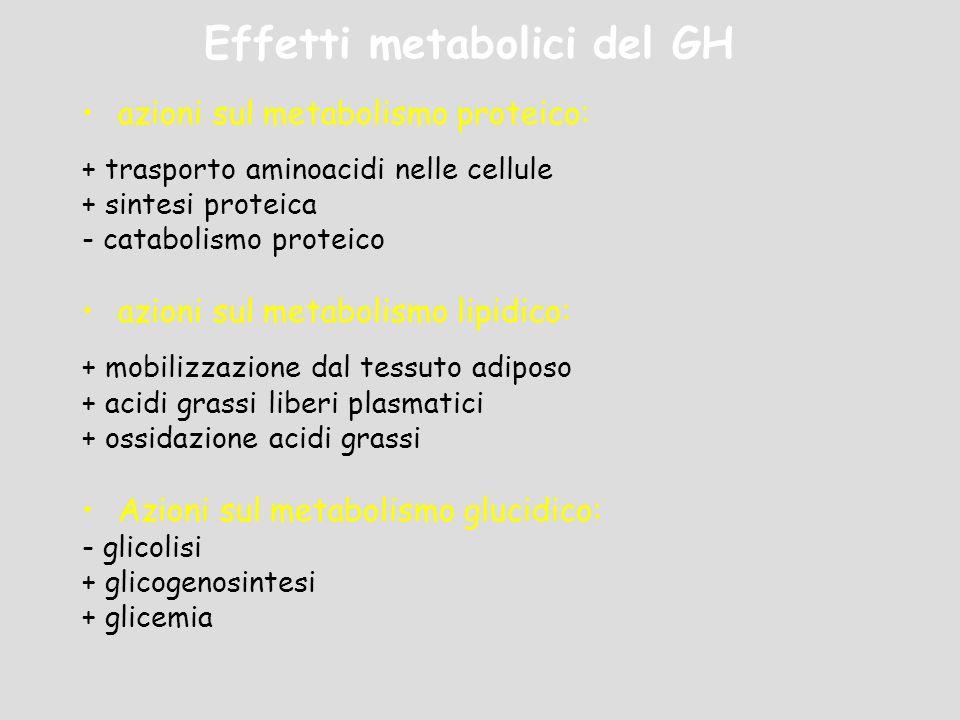 Effetti metabolici del GH