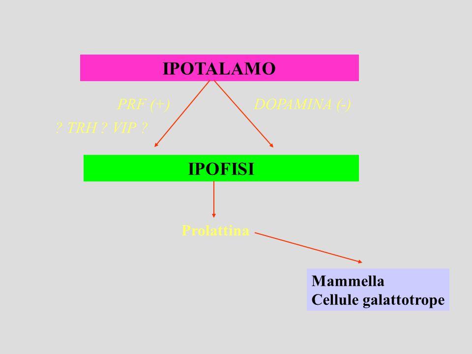 IPOTALAMO IPOFISI PRF (+) DOPAMINA (-) TRH VIP Prolattina