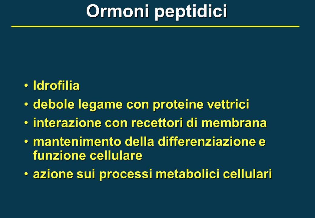 Ormoni peptidici Idrofilia debole legame con proteine vettrici