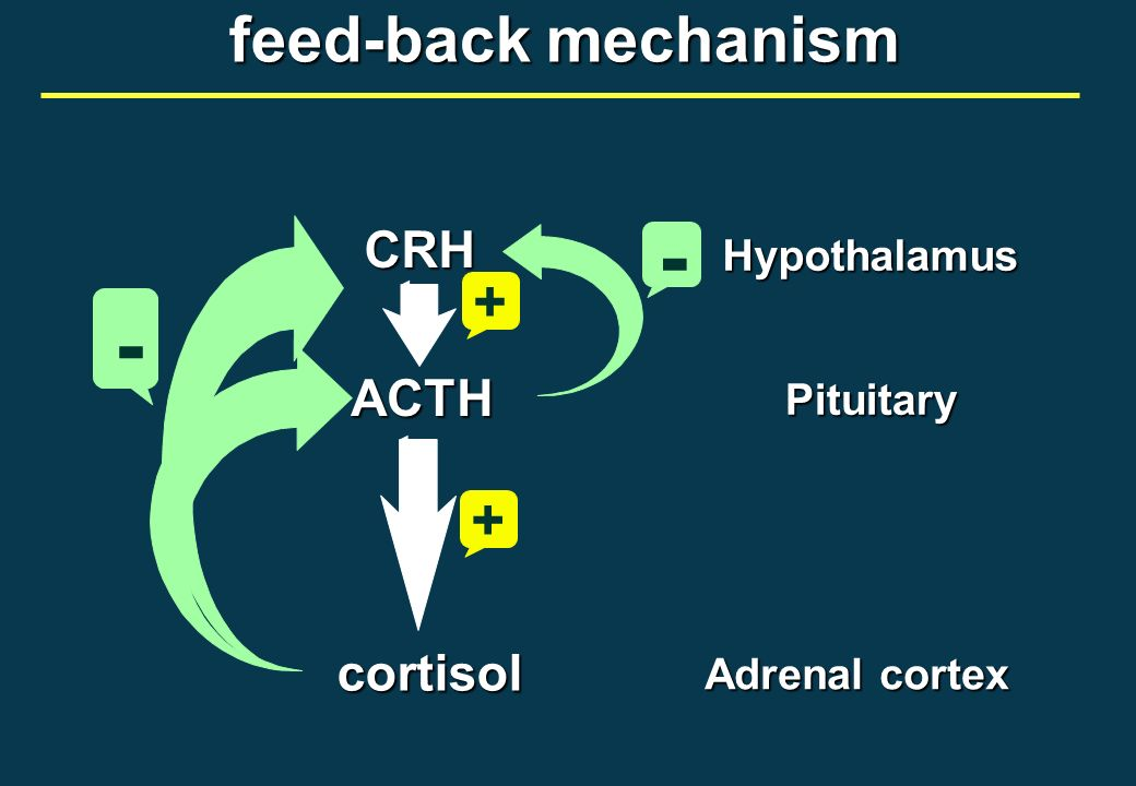 - - feed-back mechanism + + CRH ACTH cortisol Hypothalamus Pituitary