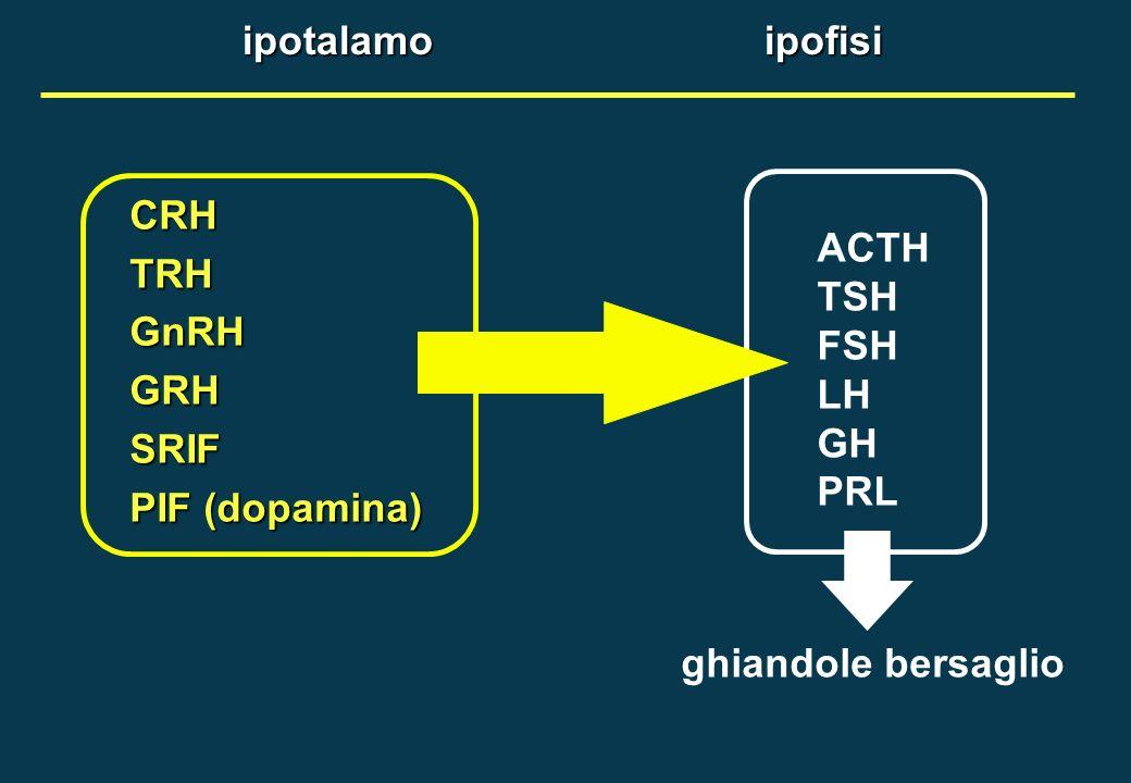 ipotalamo ipofisi ACTH. TSH. FSH. LH. GH. PRL. CRH. TRH. GnRH. GRH. SRIF. PIF (dopamina)