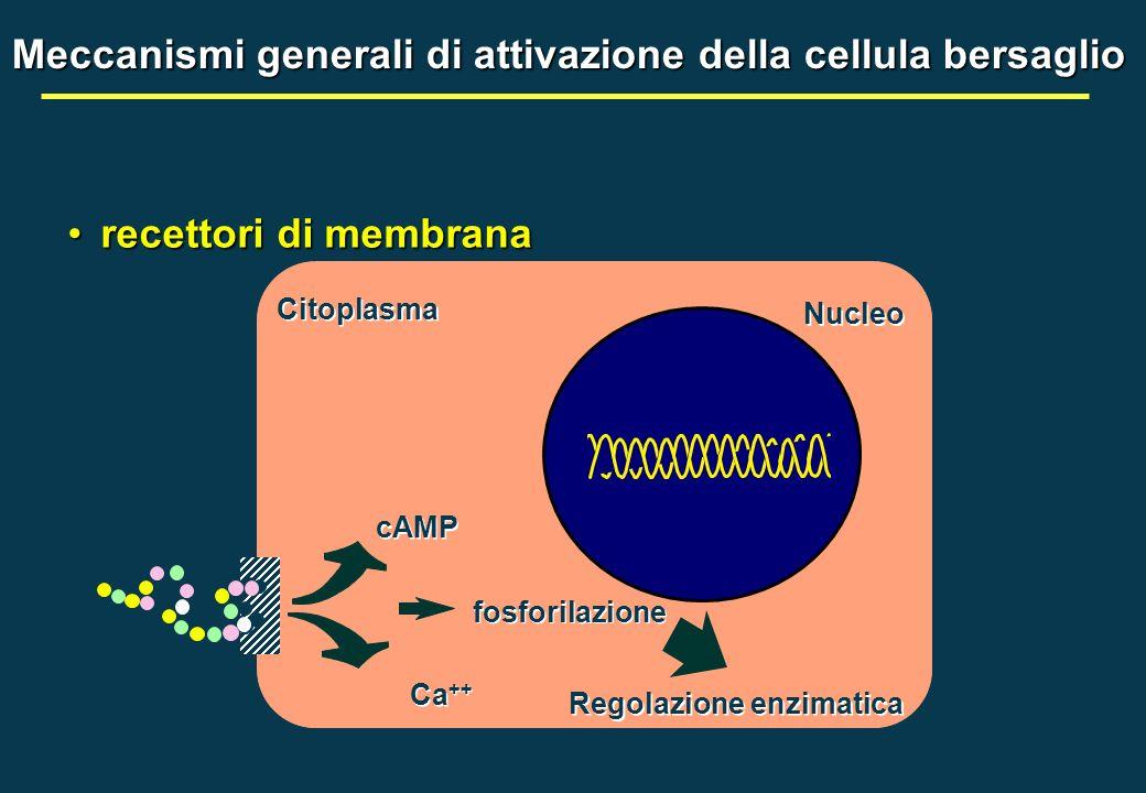 Meccanismi generali di attivazione della cellula bersaglio