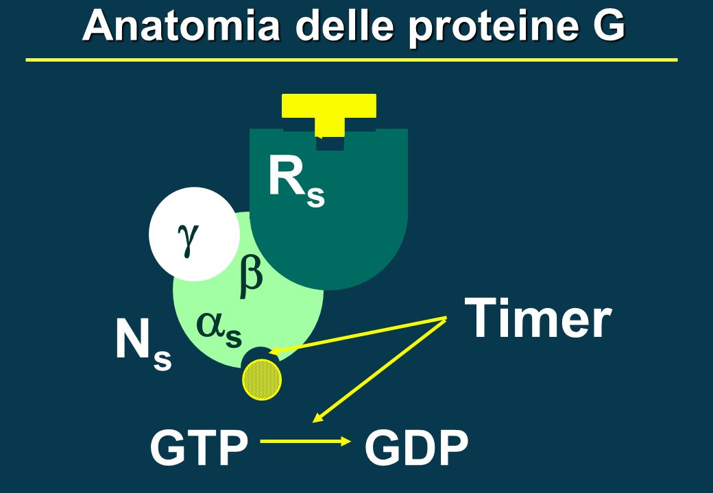 Anatomia delle proteine G