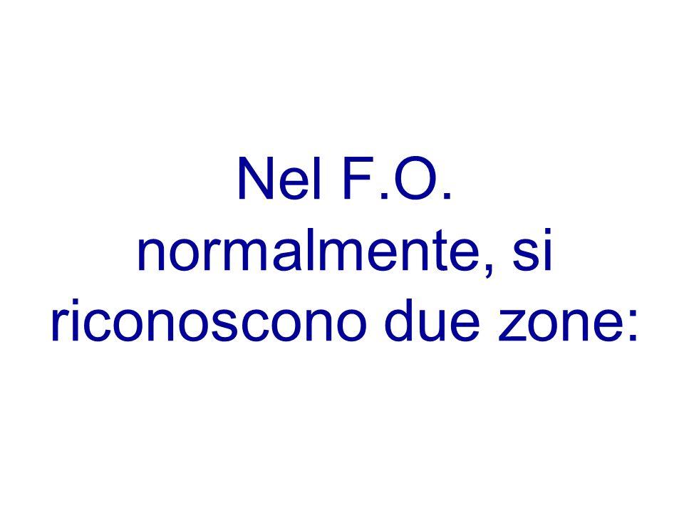 Nel F.O. normalmente, si riconoscono due zone: