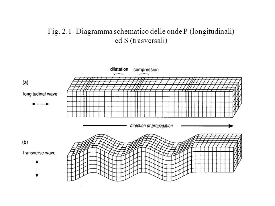 Fig. 2.1- Diagramma schematico delle onde P (longitudinali) ed S (trasversali)