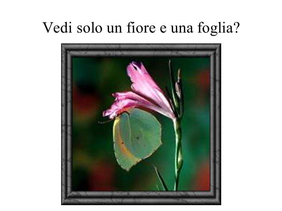 Vedi solo un fiore e una foglia