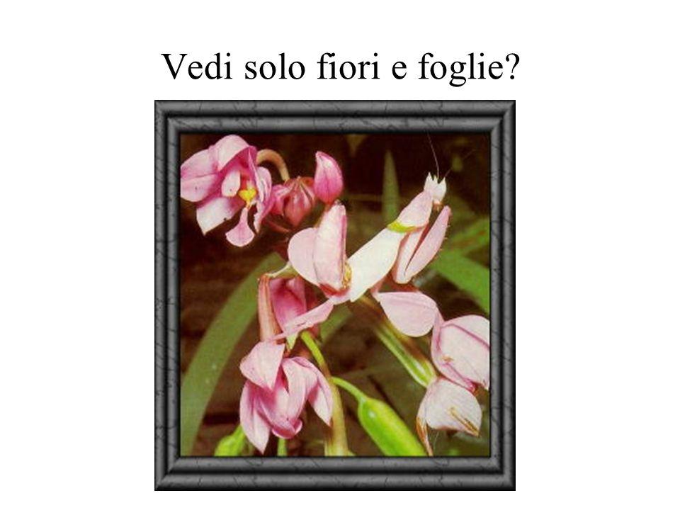 Vedi solo fiori e foglie