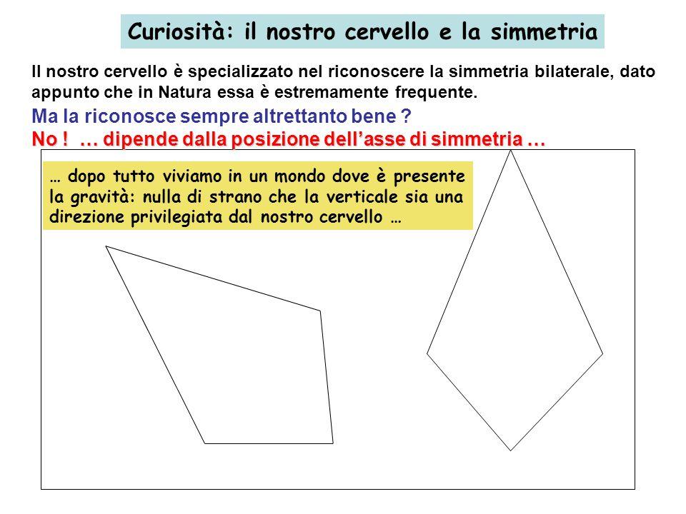 Curiosità: il nostro cervello e la simmetria