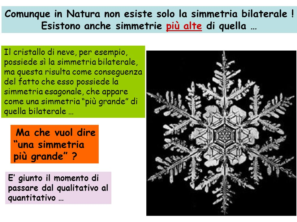 Comunque in Natura non esiste solo la simmetria bilaterale !