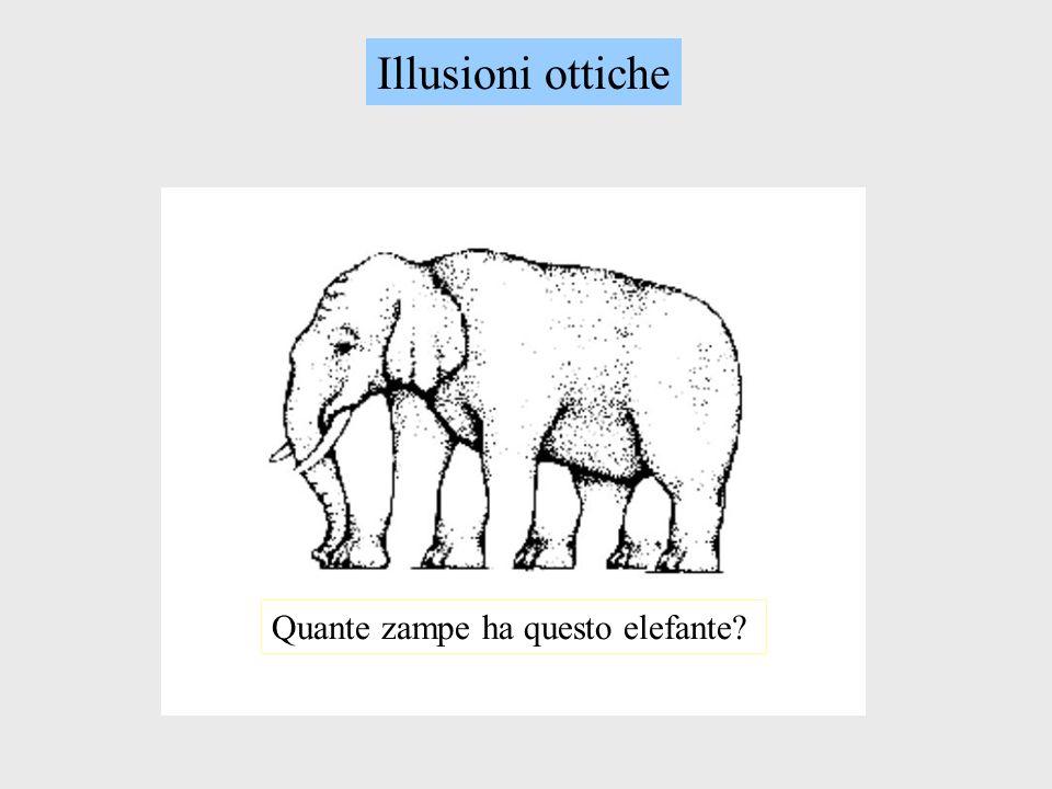 Illusioni ottiche Quante zampe ha questo elefante