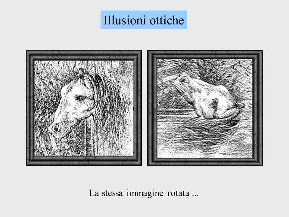 Illusioni ottiche La stessa immagine rotata ...