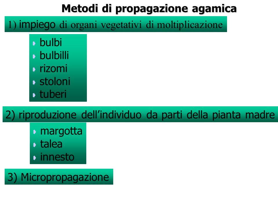 Metodi di propagazione agamica