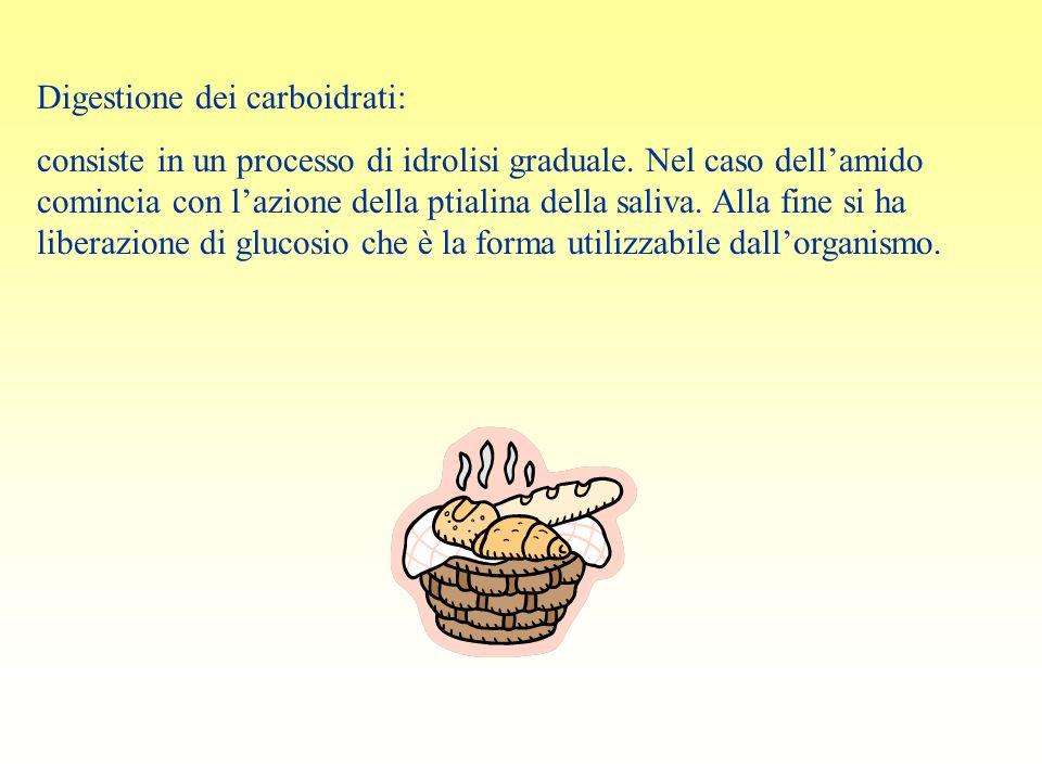 Digestione dei carboidrati:
