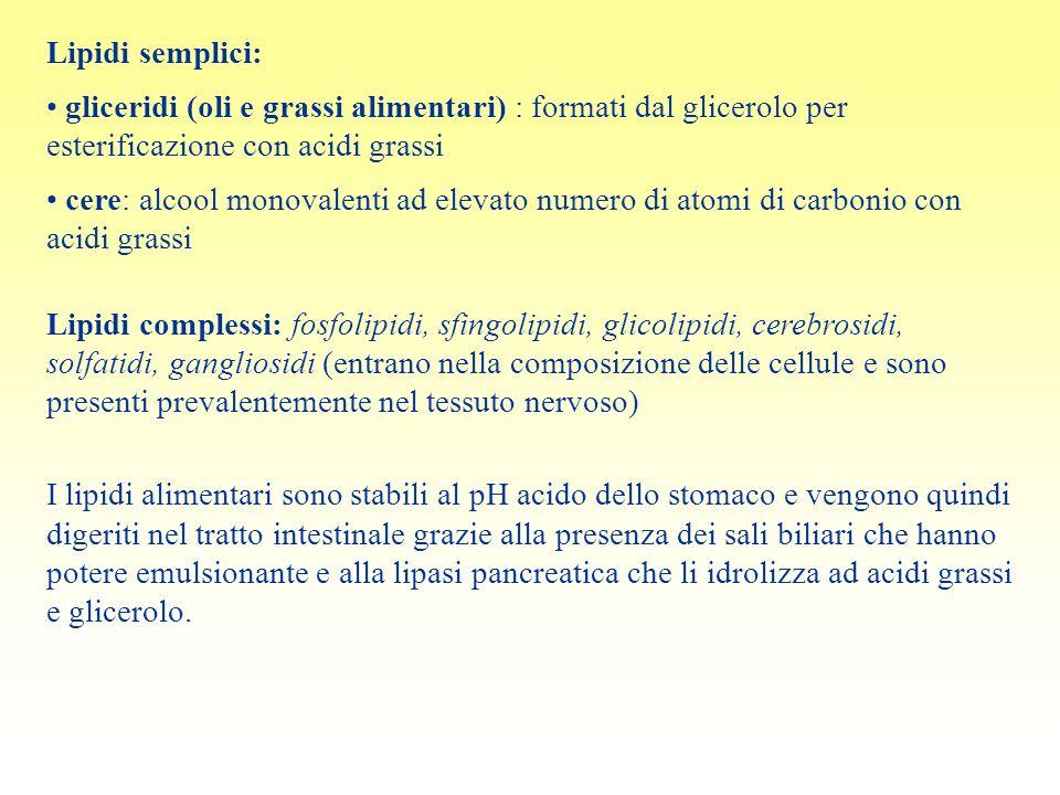 Lipidi semplici: gliceridi (oli e grassi alimentari) : formati dal glicerolo per esterificazione con acidi grassi.