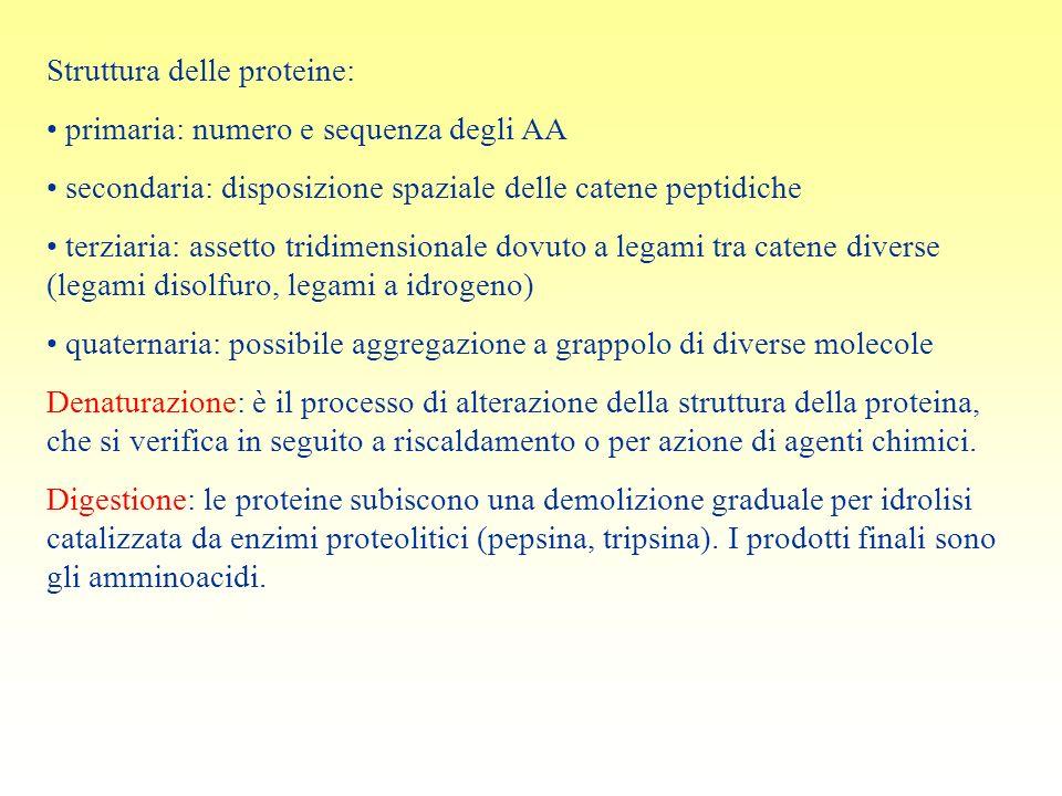 Struttura delle proteine: