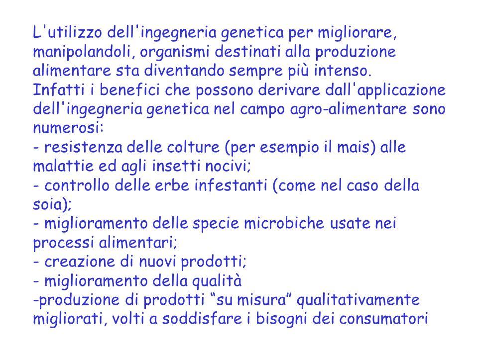 L utilizzo dell ingegneria genetica per migliorare, manipolandoli, organismi destinati alla produzione alimentare sta diventando sempre più intenso.