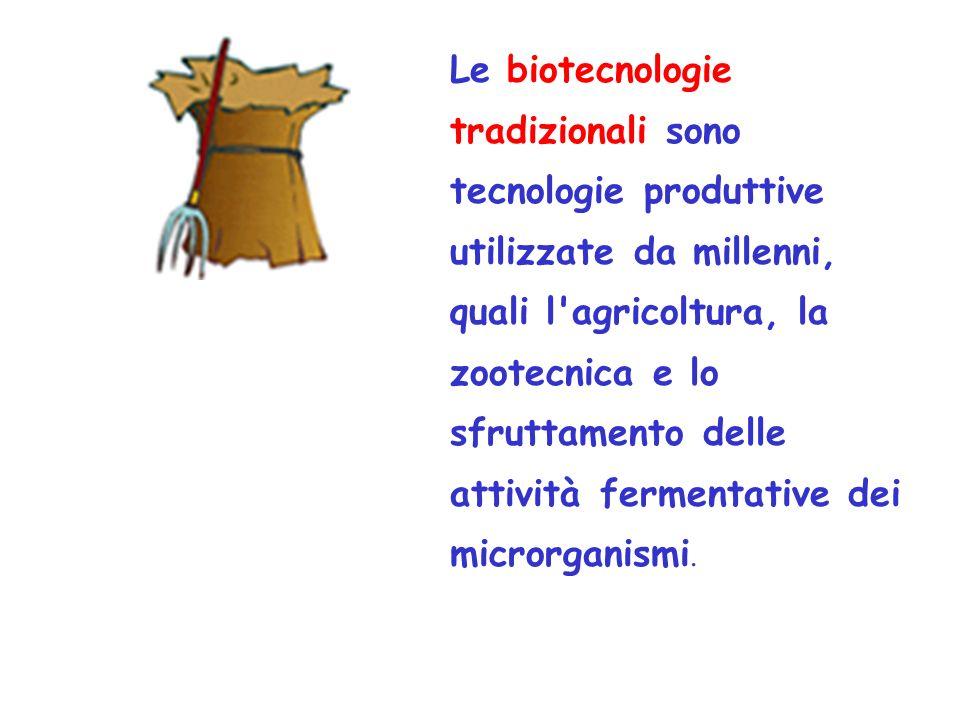 Le biotecnologie tradizionali sono tecnologie produttive utilizzate da millenni, quali l agricoltura, la zootecnica e lo sfruttamento delle attività fermentative dei microrganismi.