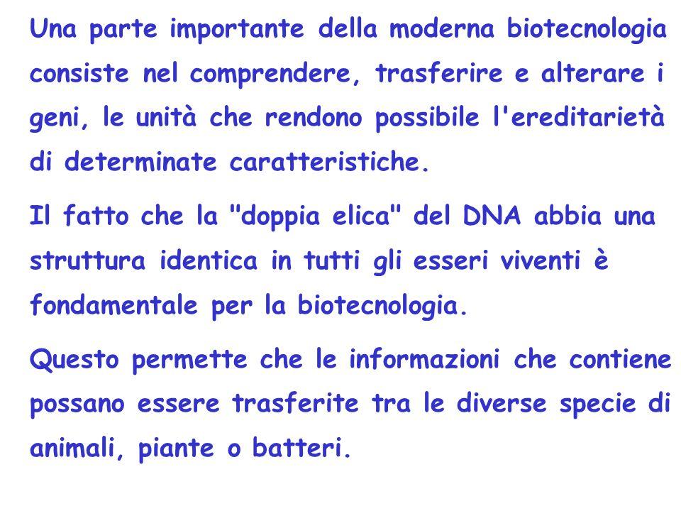 Una parte importante della moderna biotecnologia consiste nel comprendere, trasferire e alterare i geni, le unità che rendono possibile l ereditarietà di determinate caratteristiche.
