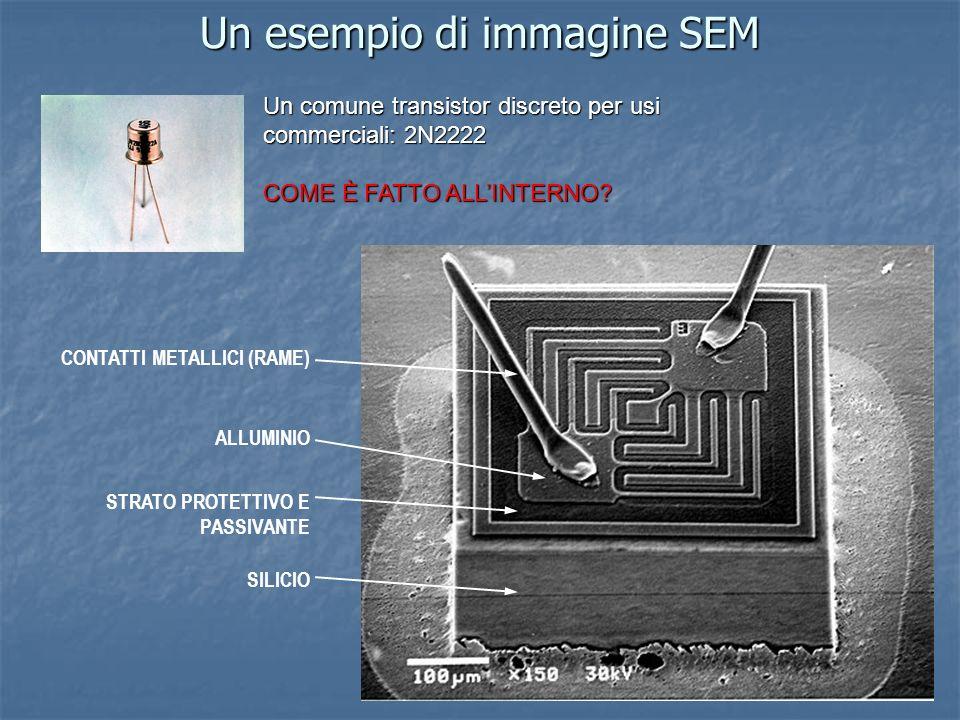 Un esempio di immagine SEM