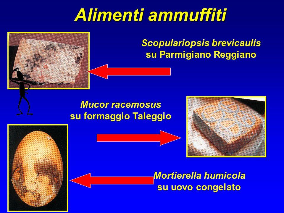 Scopulariopsis brevicaulis su Parmigiano Reggiano