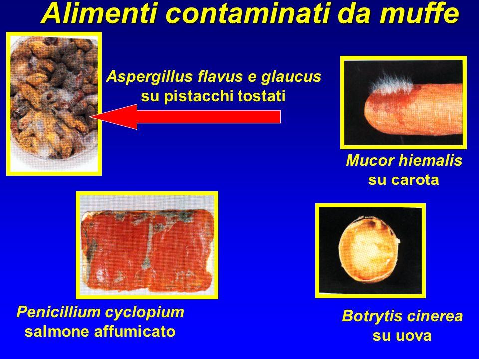Alimenti contaminati da muffe