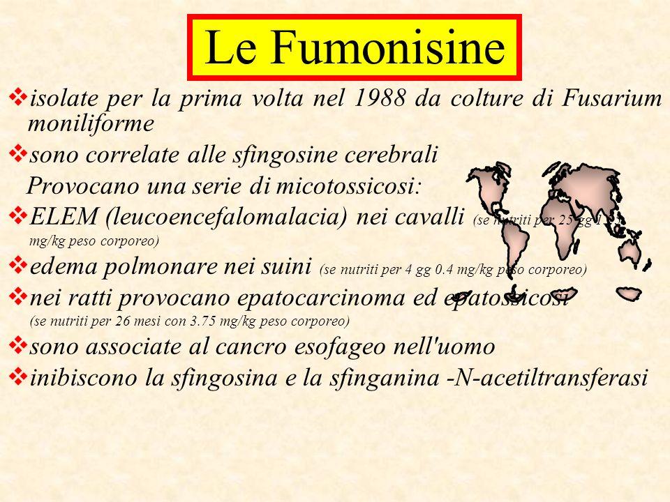 Le Fumonisine isolate per la prima volta nel 1988 da colture di Fusarium moniliforme. sono correlate alle sfingosine cerebrali.